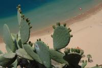 Yachtcharter Kanaren: Teneriffa - Playa de las Teresitas