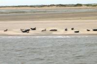 Charter IJsselmeer: Im Wattenmeer gibt es viele Seehundekolonien